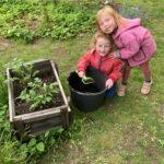 20. Mai: Louisa und Felicia Schnell beim Häufeln