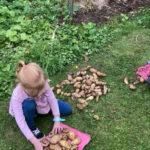 15. September: Familie Schnell bei der Kartoffelernte